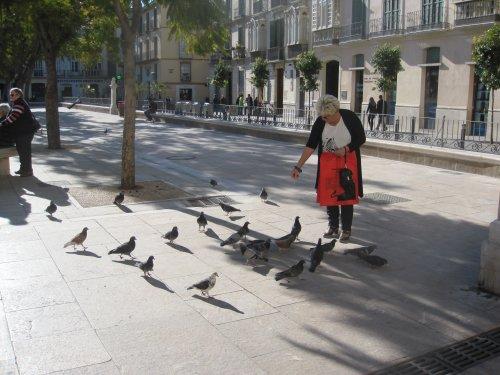 beskyttelse mod duer i vinduet