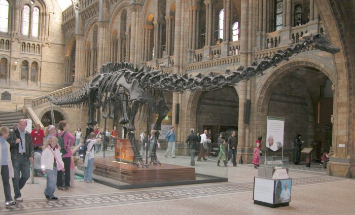 Natural History Museum kbh smerter ved gang